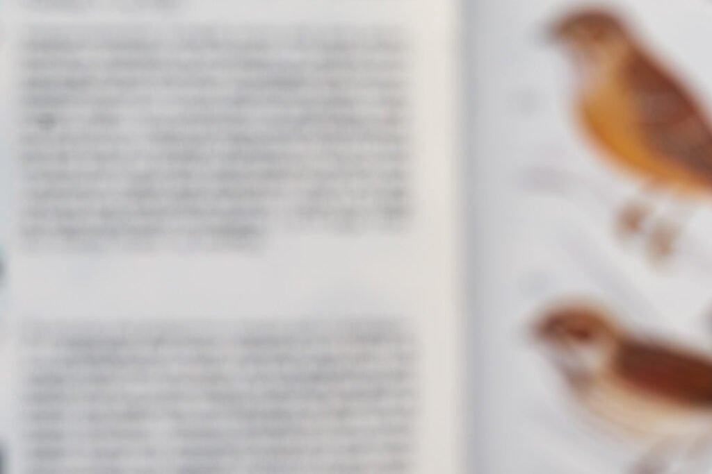 Læse med aldersyn uden +2D briller